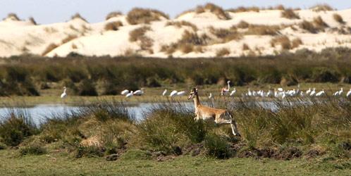 Imagen de archivo de la laguna de Santa Olalla, en pleno corazón de Doñana (EFE).