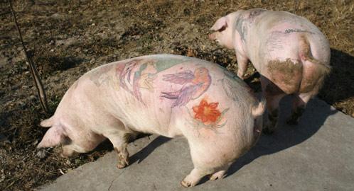 Nalgona con tatuaje - 5 4